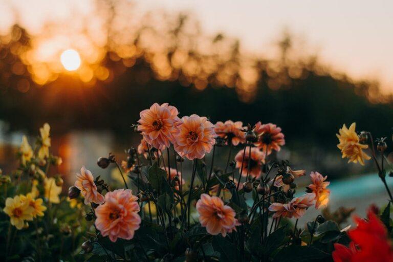 Flores contra o Feminicídio – Notícias Adventistas